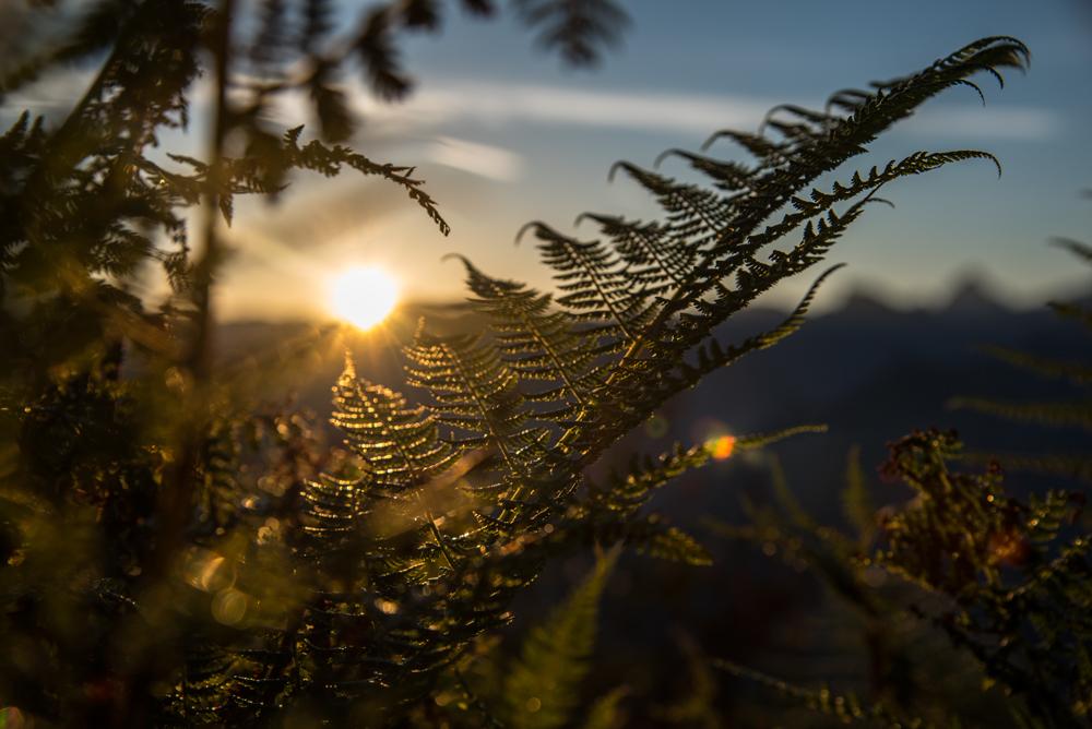APARTHÄUSER Steiner | Farn mit Sonnenuntergang im ALLGÄU